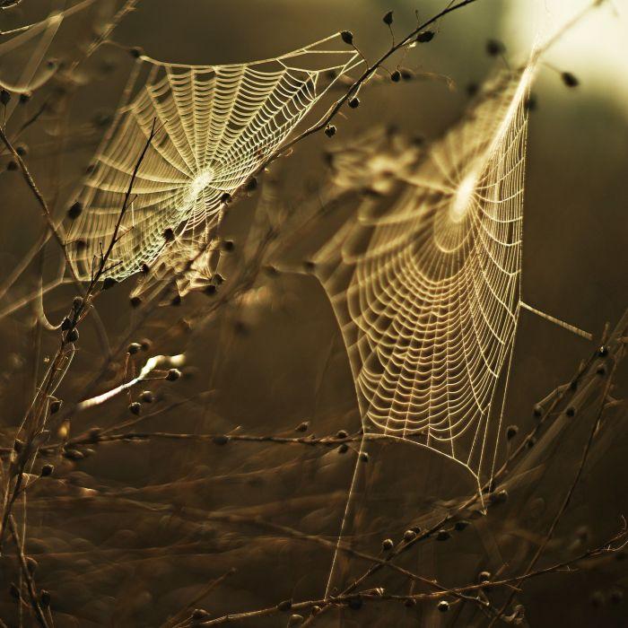 Meadow Web Sunset spider wallpaper