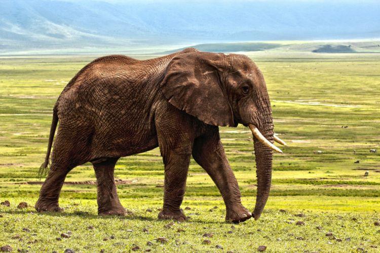 Elephant Safari Animal Defence Color Animals wallpaper