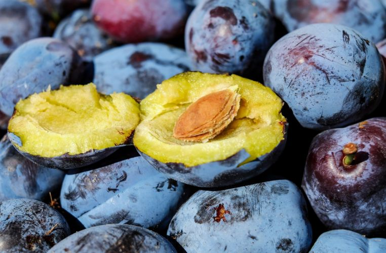 Plum Fruit wallpaper
