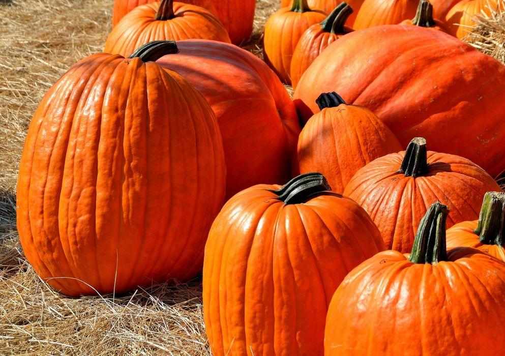 Autumn Halloween Pumpkin Orange wallpaper