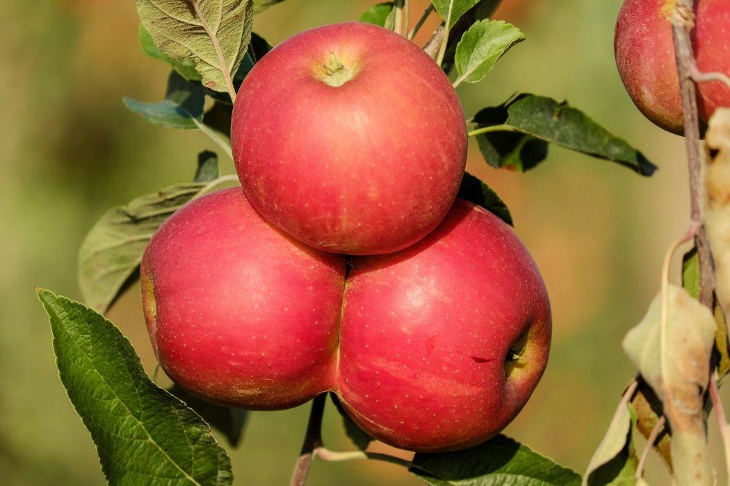 Apple Frui wallpaper