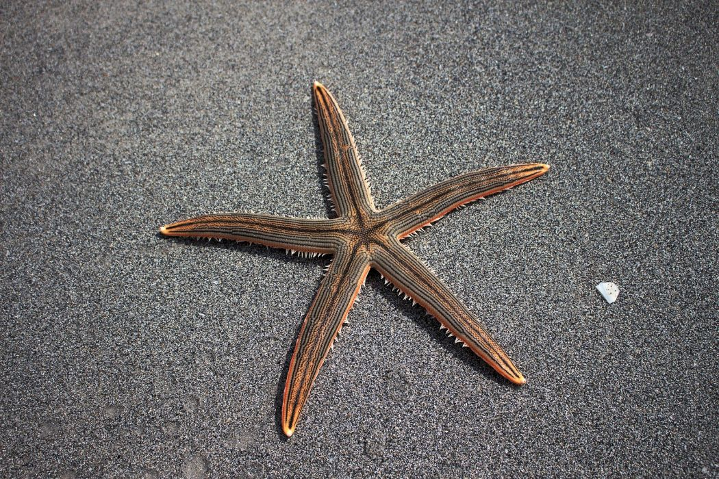 Sea Star Beach starfish wallpaper