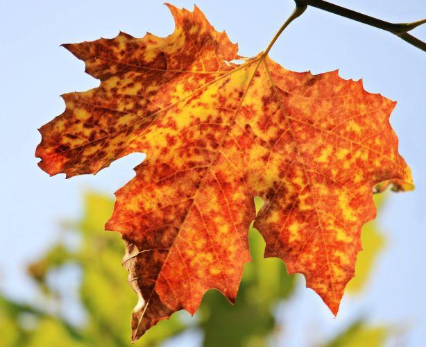 Autumn Autumn Leaf Leaves Foliage wallpaper