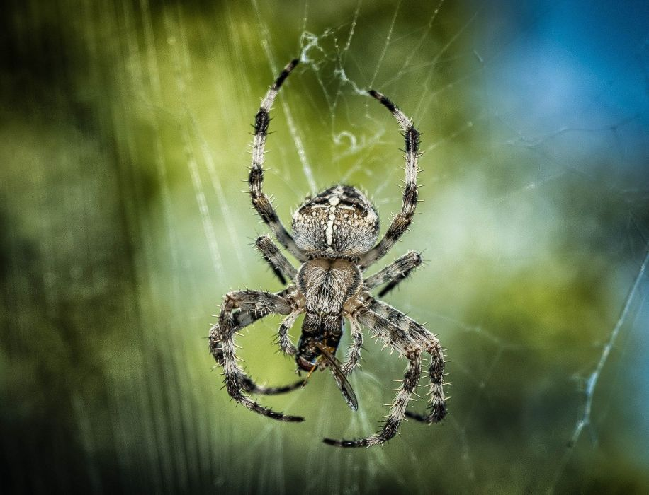 Spider Insect Network Close Nature Animal wallpaper