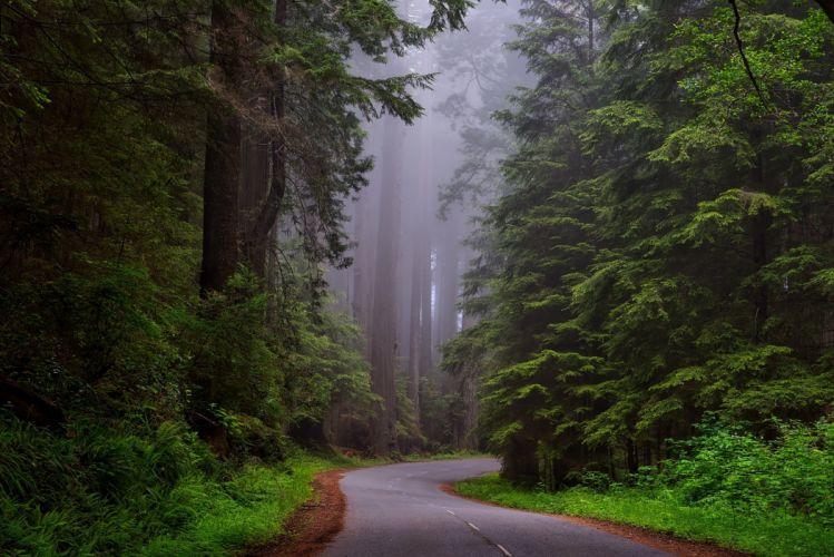 Redwood National Park California Hdr Landscape wallpaper