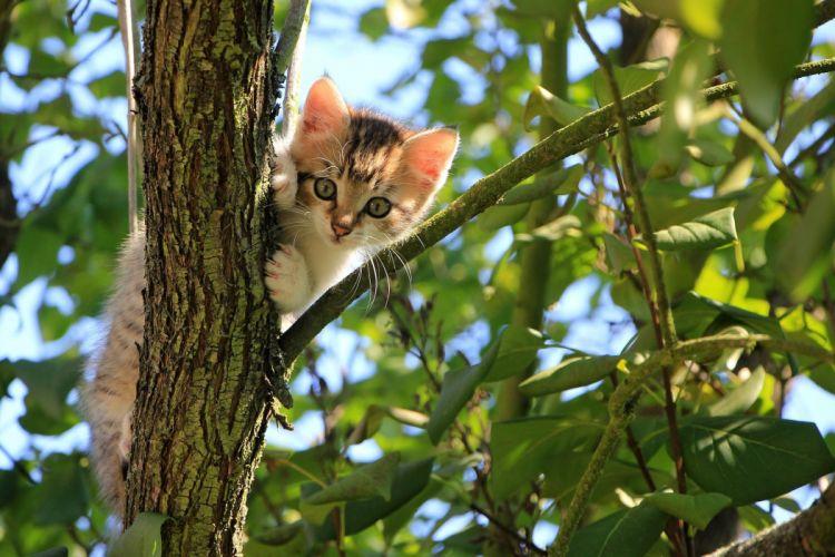 Cat Kitten Tree wallpaper