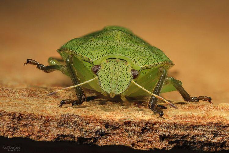 Bug Nature Macro wallpaper