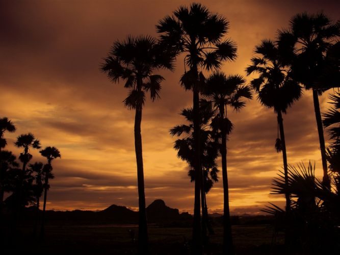 Thailand Sunset Nature Asia palm tree wallpaper