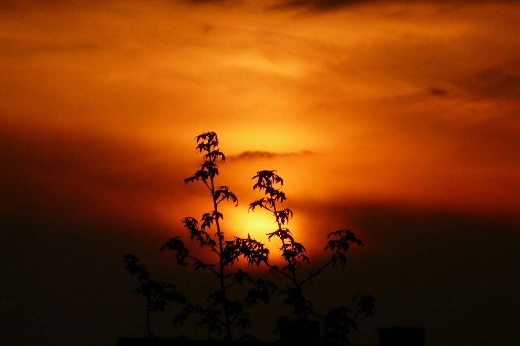 Sunset Landscape Plant Nature wallpaper