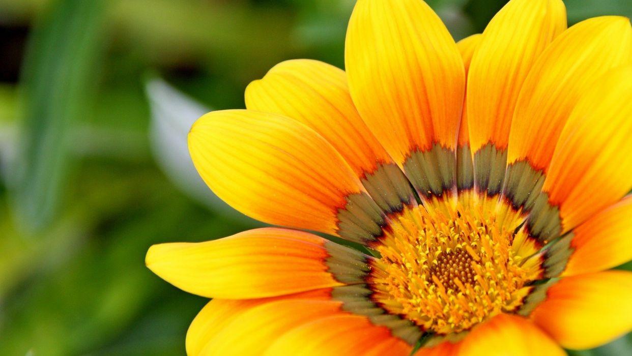 Yellow Natural Flower wallpaper