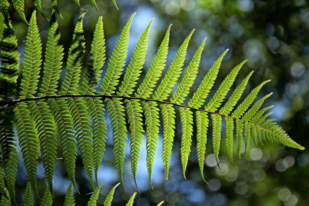 Green Fern Leaf Natural wallpaper