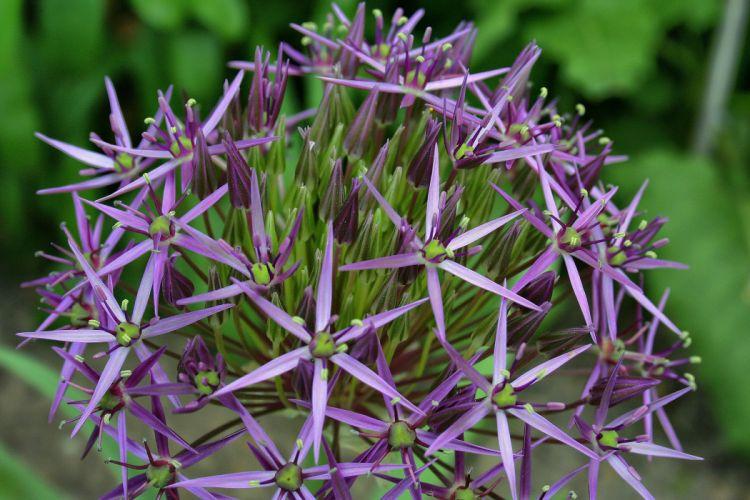 Flower Star Nature wallpaper