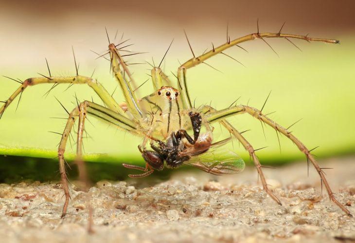 Spider Insect Macro Nature Arachnid wallpaper