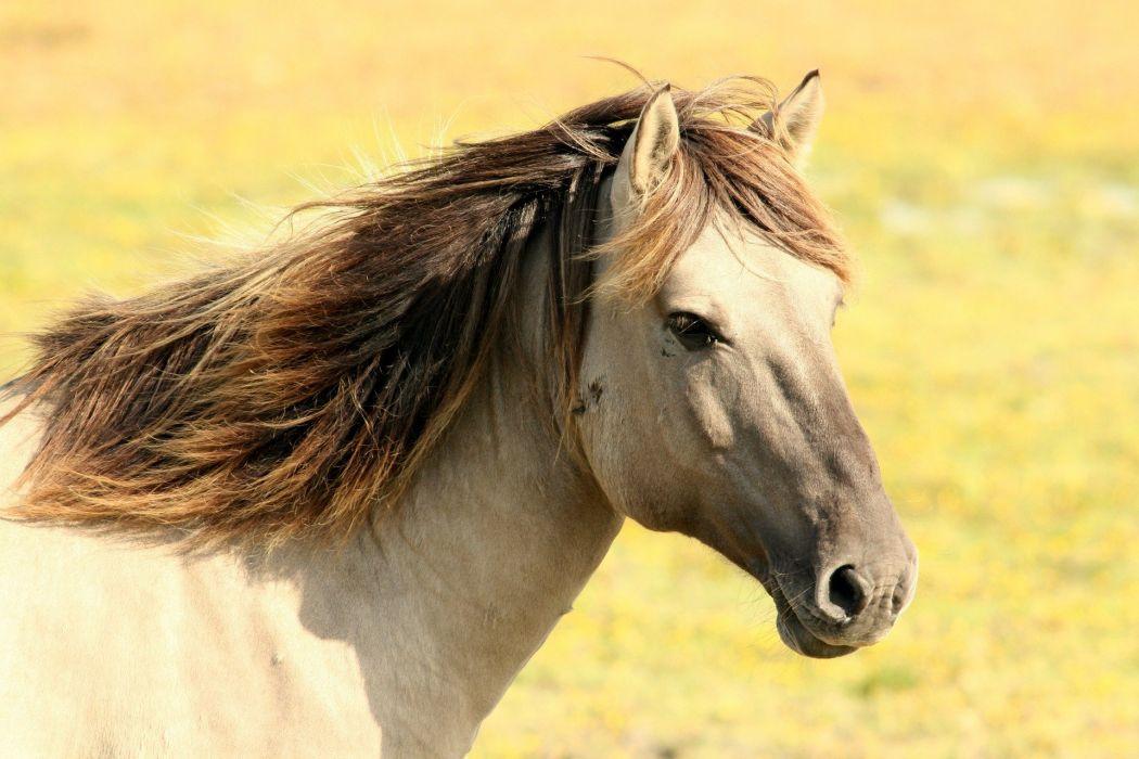 Horse Pasture Nature Animal wallpaper