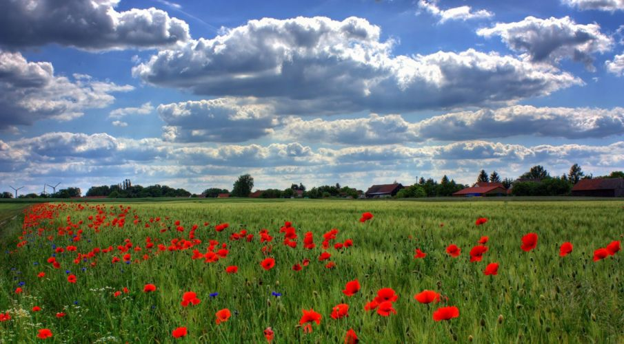 Field Of Poppies Brandenburg Nature wallpaper