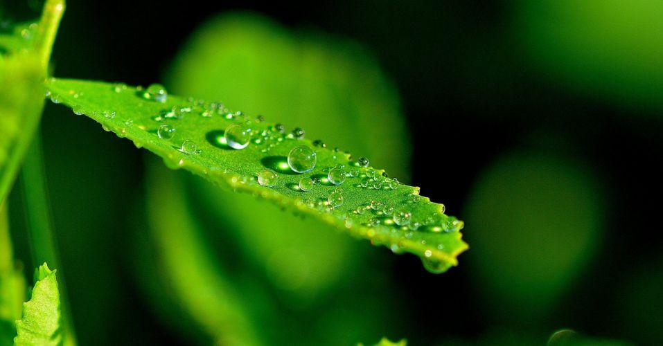 Nature Leaf Detail Drops Macro wallpaper