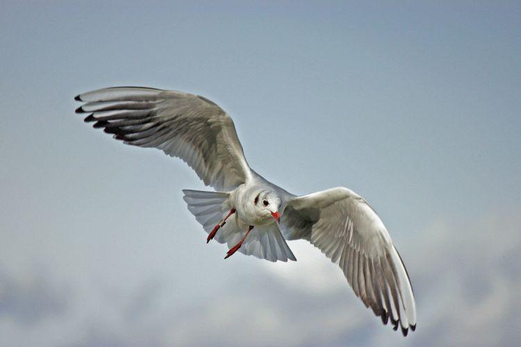 Seagull Lake Balaton Nature Bird wallpaper