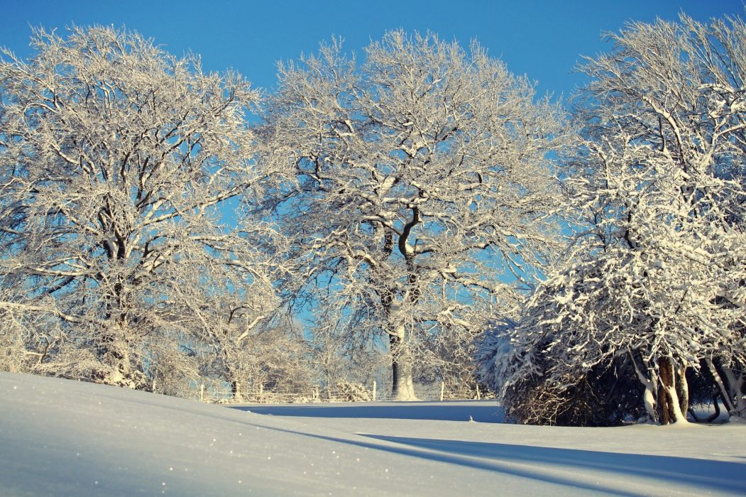 Snow Snowy Trees Winter wallpaper