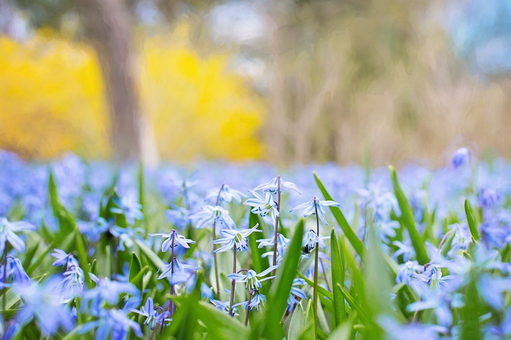 Spring Flowers Country Nature Blossom Meadow wallpaper