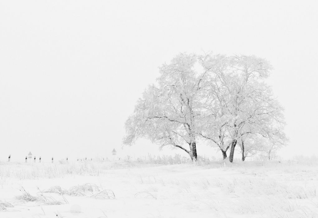 Winter Nature Season Trees Sky Snow White wallpaper