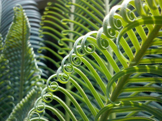Palma Plant Leaves Nature Green Vegetation palm wallpaper