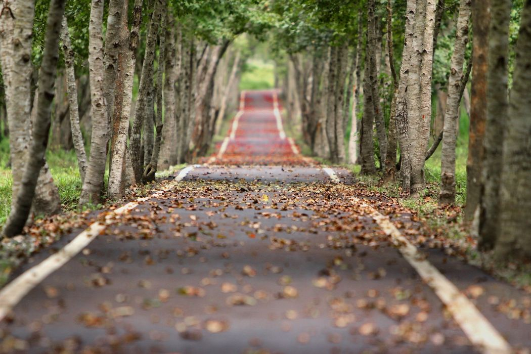 Road Leaf Natural Tree Wood autumn wallpaper