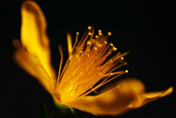 Macro Flower Nature Yellow Blossom Bloom Plant wallpaper