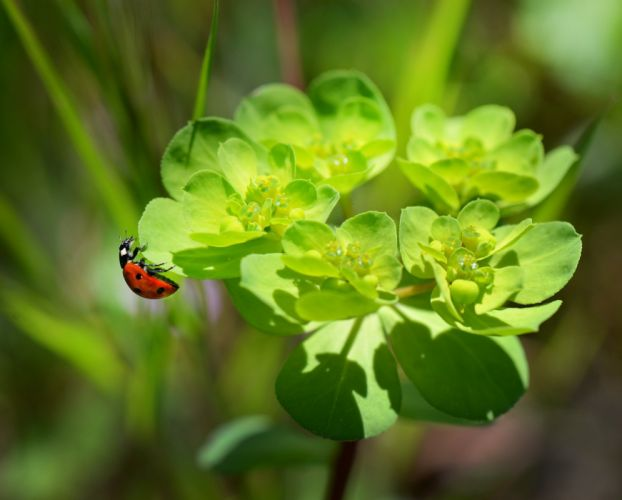 Ladybug Nature Macro Flowers Plants Red Insects wallpaper