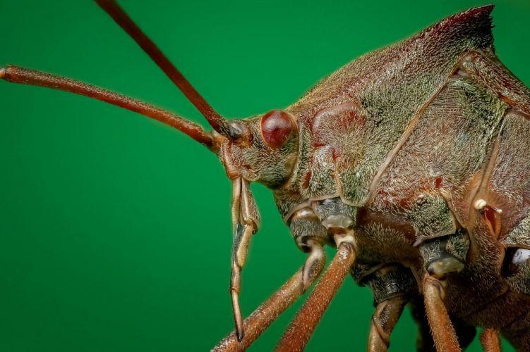 Bug Close Up Macro Insect wallpaper