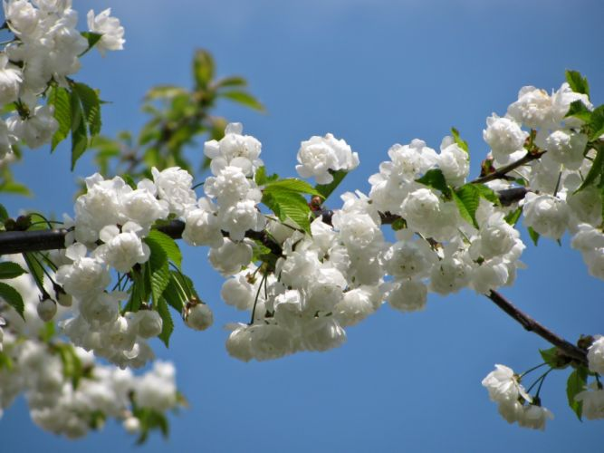 Blossom Spring Nature Colors White wallpaper