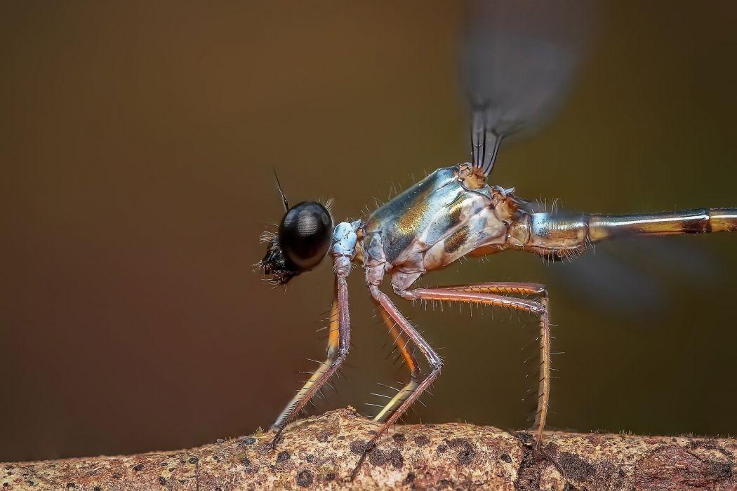Damselfly Insect Odonata Macro Close Up Dragonfly wallpaper