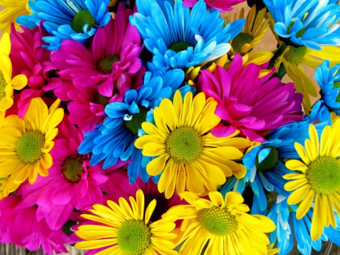 Daisies Daisy Flowers Bloom Colorful Petals wallpaper