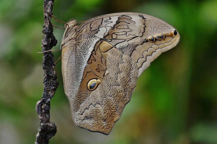 Butterfly Animal Insect Wildlife Fly Macro Wings wallpaper