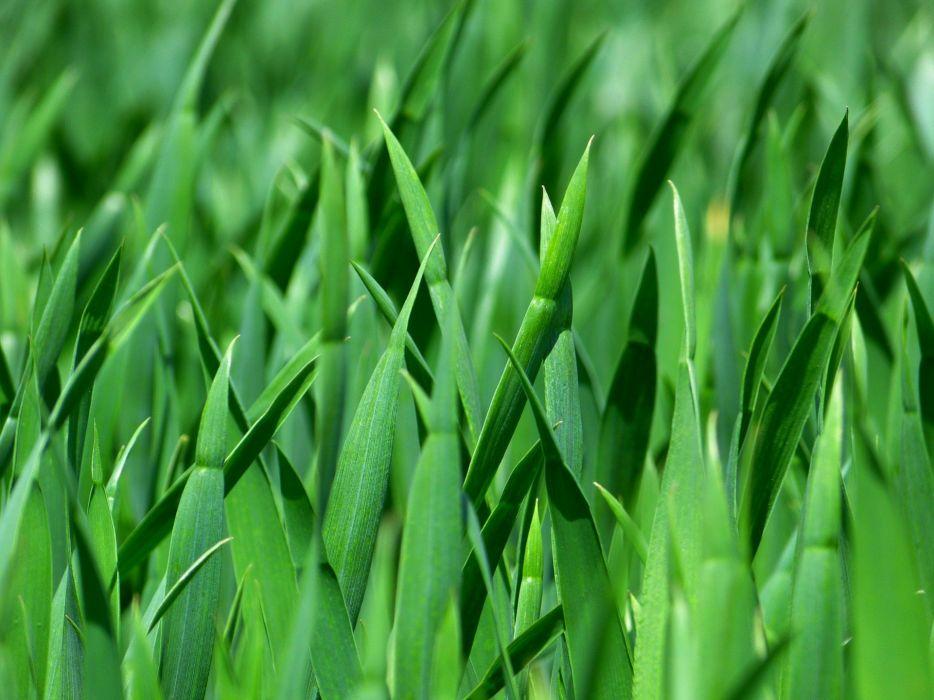 Grass Blades Of Grass Nature Meadow Close Green wallpaper