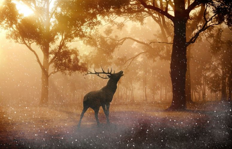 Hirsch Wild Antler Nature Forest Meadow deer winter snow wallpaper