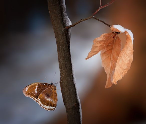 Leaves Butterfly Nature wallpaper