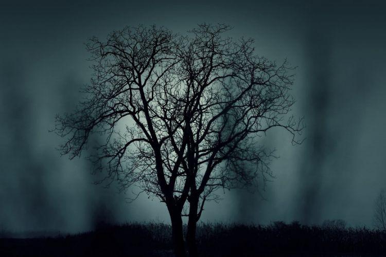 Tree Silhouette Mysterious Halloween Black Dark wallpaper
