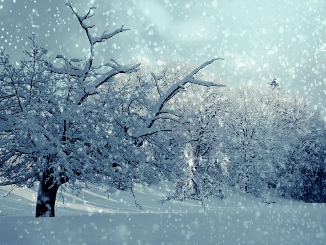 Winter Snow Snowfall Trees wallpaper