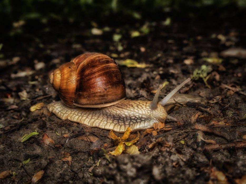 Snail Nature Mollusk wallpaper