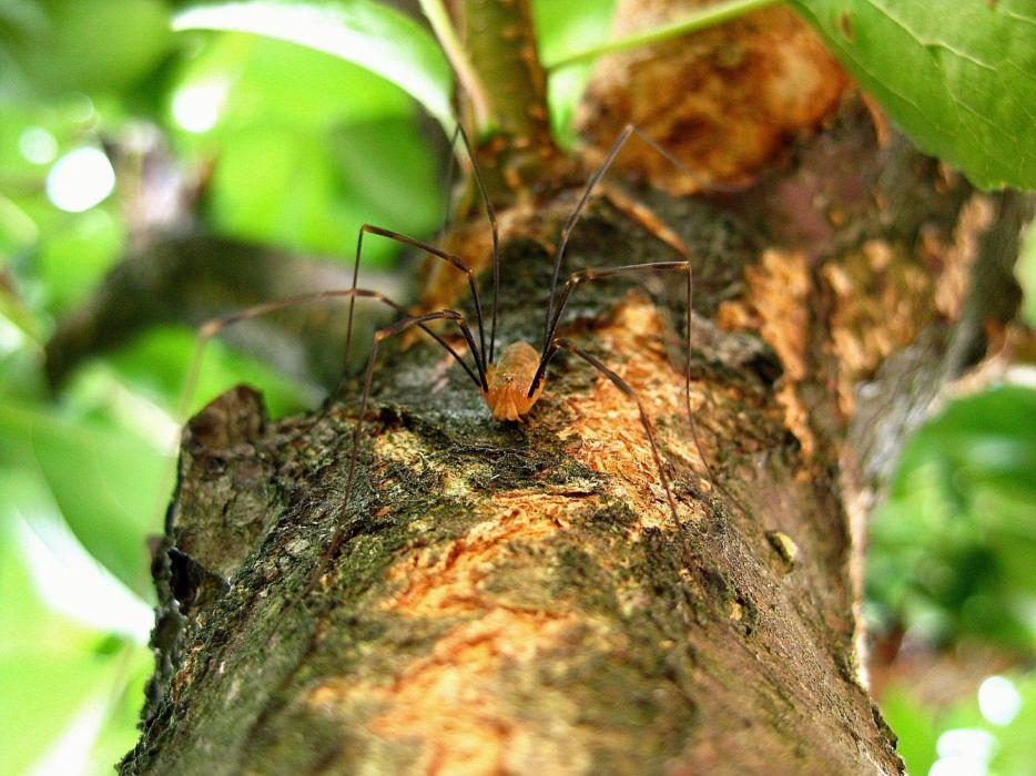 Spider Nature wallpaper