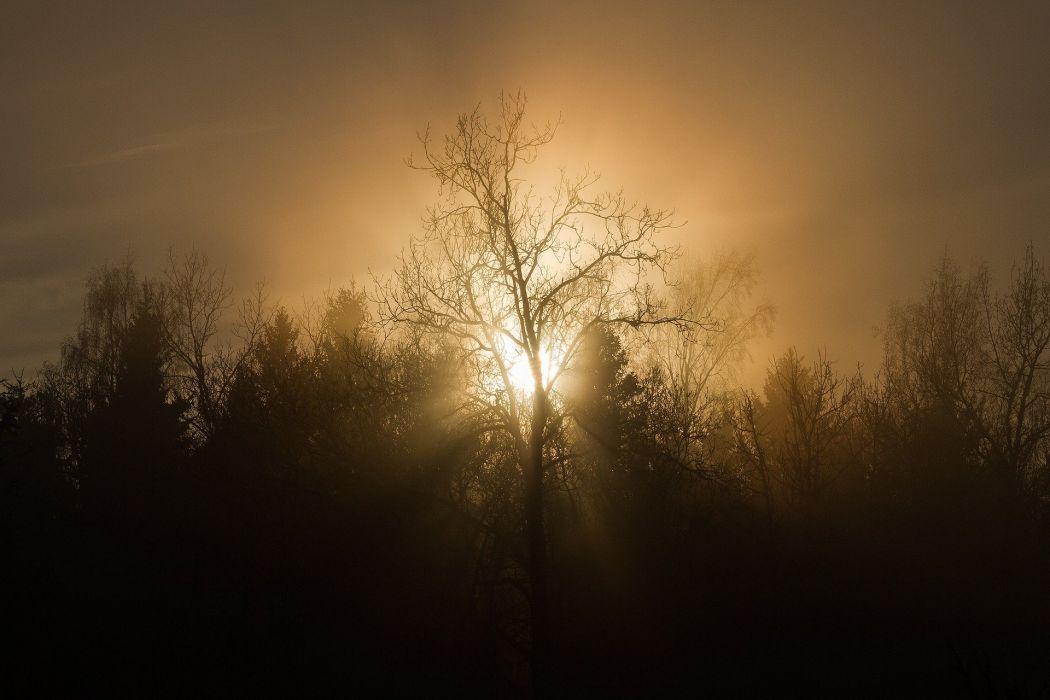 Sunset Trees Mist Silhouette Sun Nature Evening wallpaper