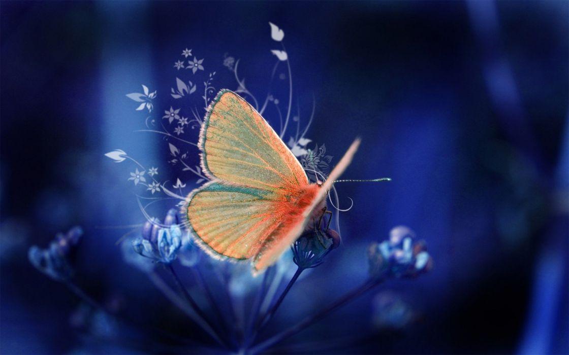 Flower Butterfly blue orange wallpaper