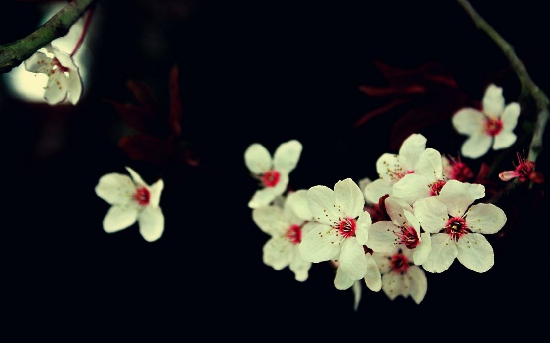 flowers macro nature photography plants wallpaper