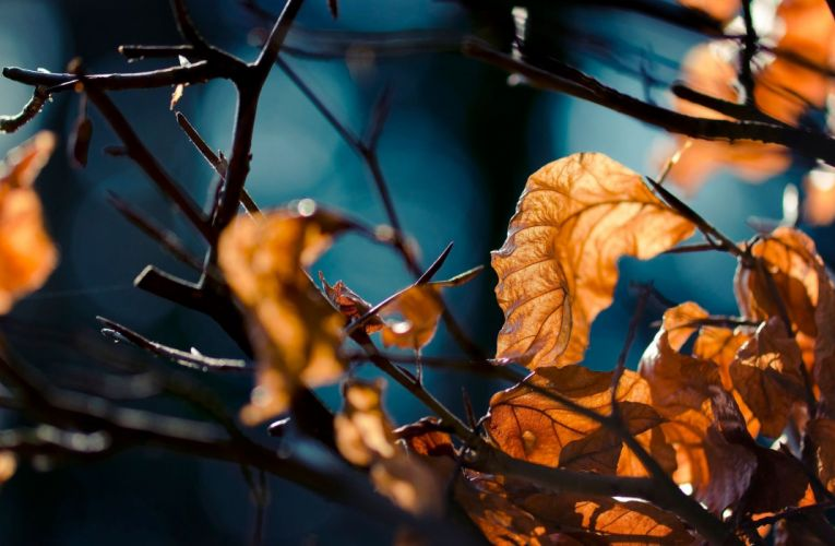 Depth Of Field Fall leaves nature Twigs wallpaper