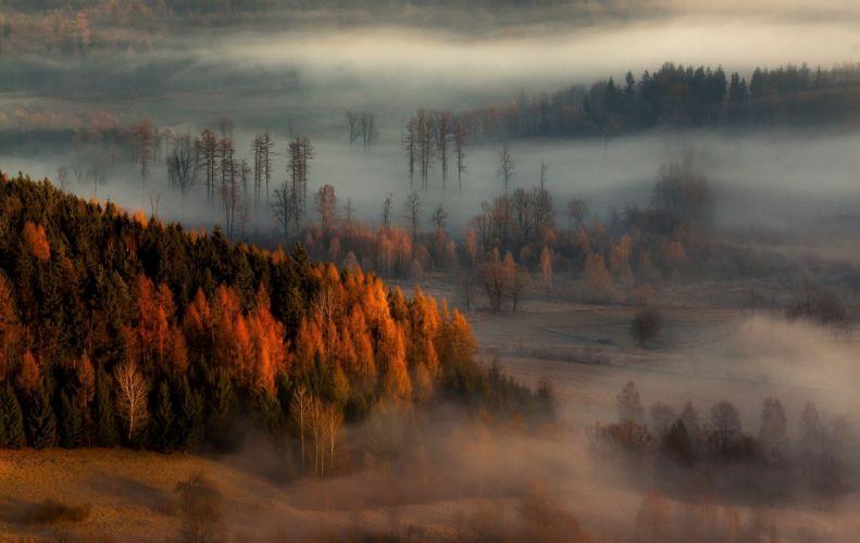 Fall forest Hill landscape mist nature sunrise Trees wallpaper