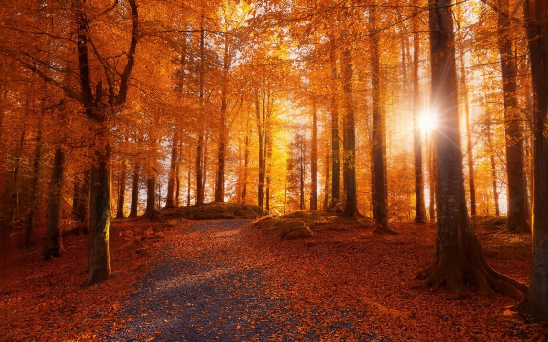 Dirt Road Fall forest landscape leaves Morning nature Norway path sunlight Trees wallpaper