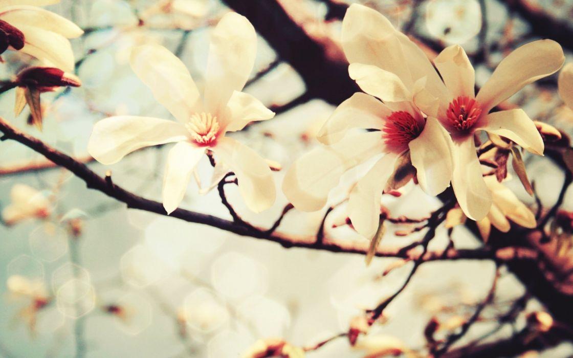 branch flowers White Flowers wallpaper