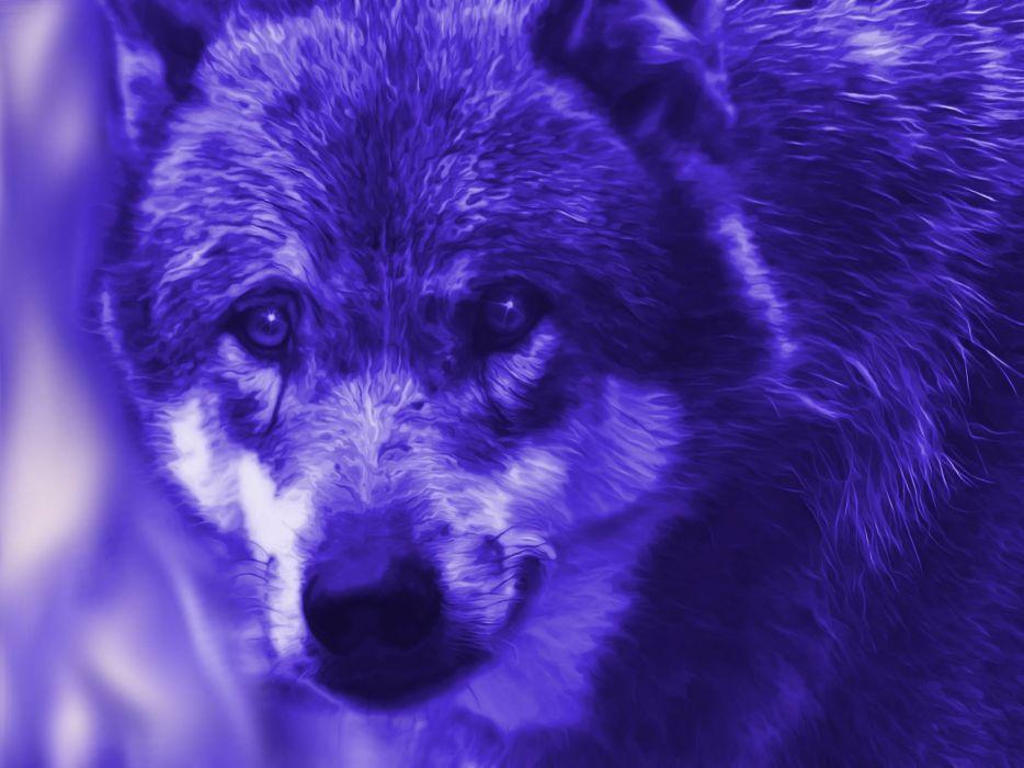 Fantasy Wolf Blue Mystical FairyTale manipulation wallpaper
