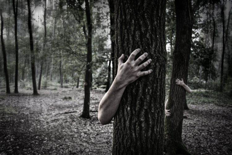 Hands Trunk Creepy Zombie Forest Horror Scary forest wallpaper
