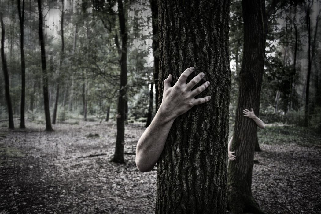 Hands Trunk Creepy Zombie Forest Horror Scary Wallpaper